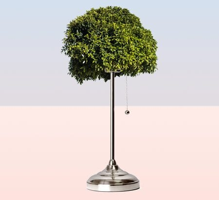Ein Baum mit einem Lampenfuss als Wurzel