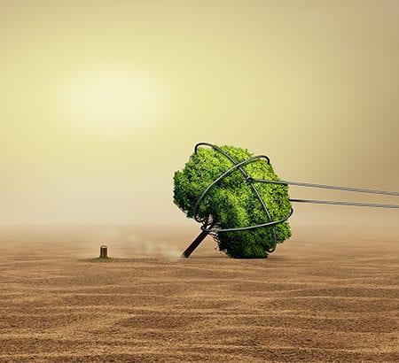 Ein Baum in der Wüste verschwindet