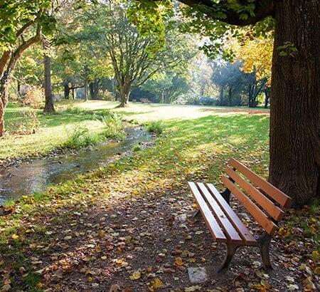 Ein Parkbank auf einem Waldfriedhof