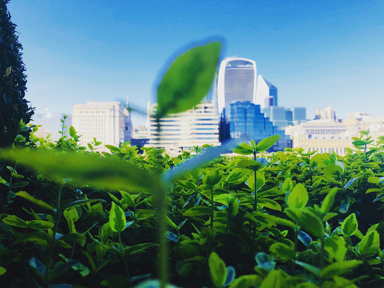 Klimaschutz Profit Stadt