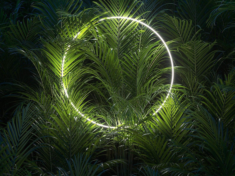 Ein runder Lichtkreis aus LED beleuchtet grüne Palmenblätter im Dunkeln.