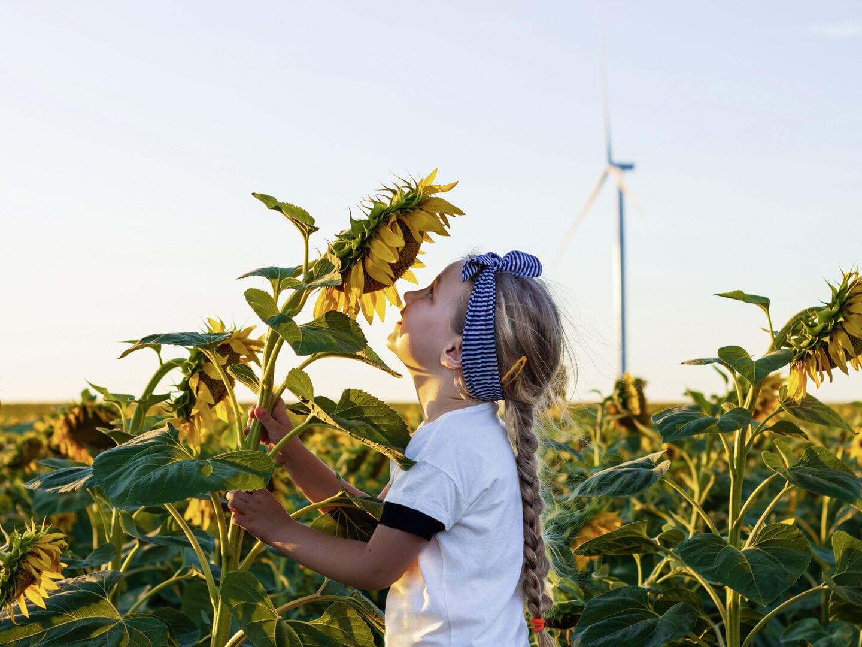 Kleines blondes Mädchen steht im Sonnenblumenfeld und küsst eine Sonnenblume. Im Hintergrund ist ein Windrad zu sehen.