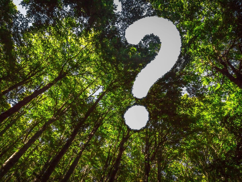 Ein Fragezeichen im Wald