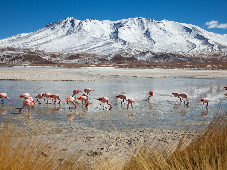 Flamingos stehen in einer Pfütze vor Alpen