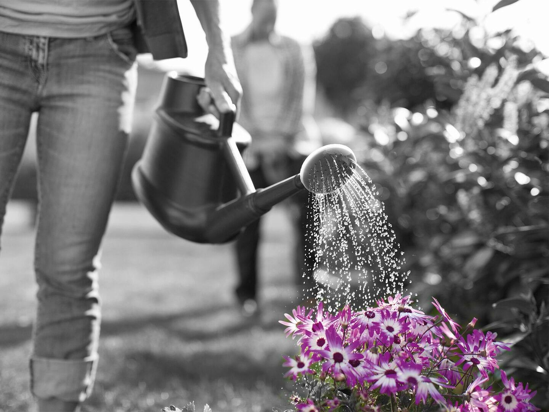 Blumen werden gegossen