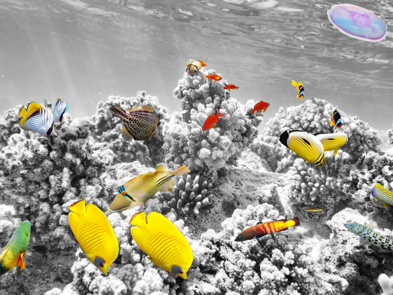 Ein Korallenriff mit Fischen
