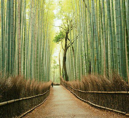Ein Weg durch einen Bambuswald.